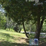 Árbol Parque de Mataleñas